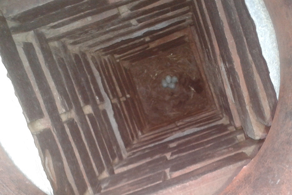 Bird Nest in Chimney